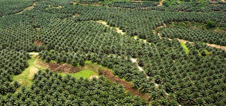 Gabon : 40 ans de dépendance alimentaire envers l'étranger