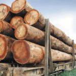 Gabon : Analyse de l'impact fiscal de l'interdiction d'exportation des grumes